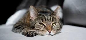Cat boarding, Kitten boarding, boarding, cat, kitten, Cat stays, Kitten stays