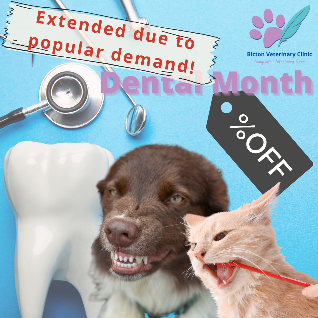 Dental Dentistry Month July/August Special