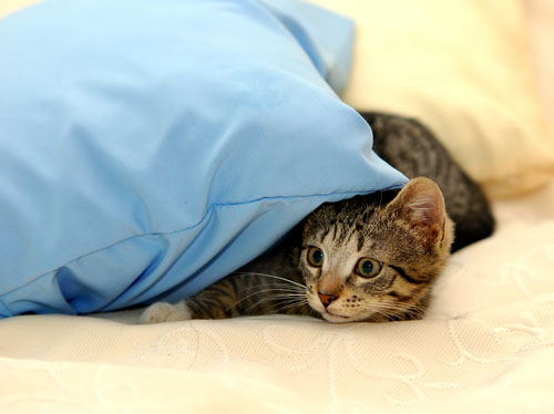 Vaccinate your cat to protect against contagious diseases