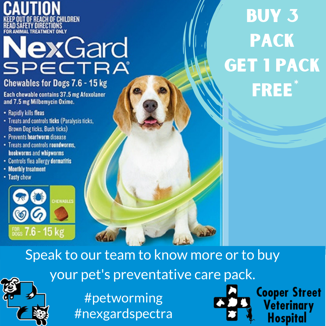 Heartworm and Intestinal Worm Prevention at Cooper Street Vet Hospital