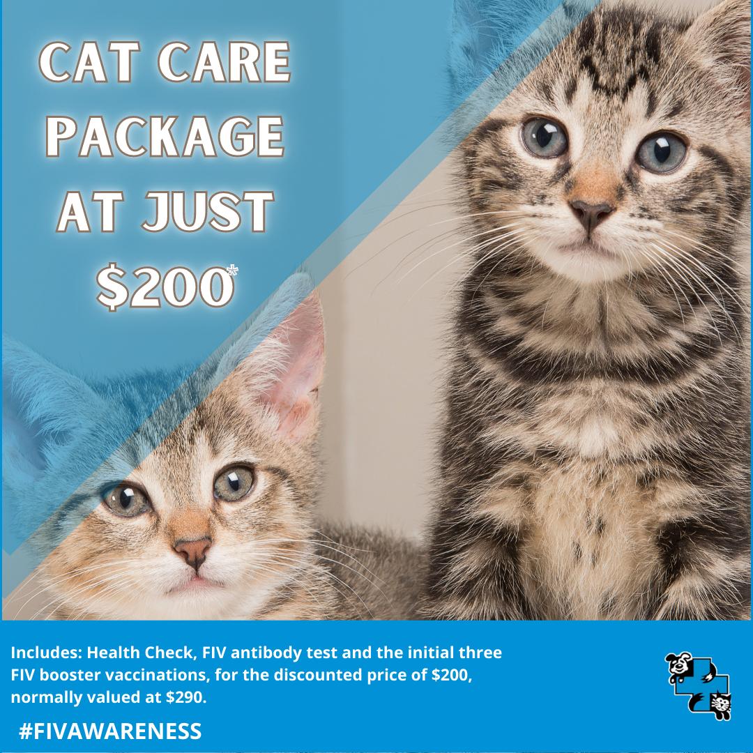 Discounted Cat care package at Kooringal Vet Hospital, Wagga Wagga