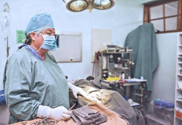 Surgery, Surgical Procedure, Veterinary Surgeon, Dr Christine Kidd