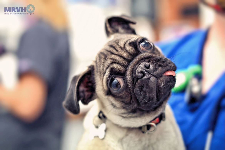 Microchip, Pug