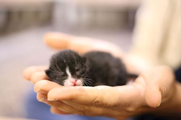 A tiny kitten in the palm of someones hand