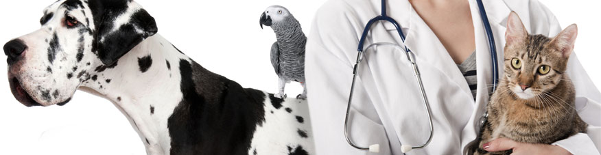 Meet our friendly veterinarian staff