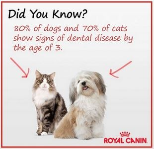 High rate of dental disease in dogs and cats