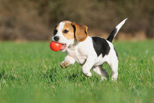 dog vaccination federation veterinary hospital
